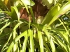 mt-cootha-botanical-gardens17