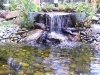 mt-cootha-botanical-gardens19