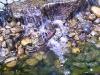 mt-cootha-botanical-gardens21