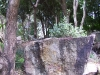 mt-cootha-botanical-gardens23