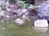 mt-cootha-botanical-gardens25