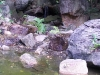 mt-cootha-botanical-gardens26