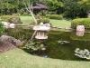 mt-cootha-botanical-gardens28