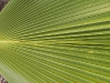 mt-cootha-botanical-gardens29