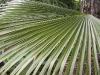 mt-cootha-botanical-gardens30