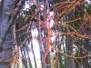 mt-cootha-botanical-gardens32