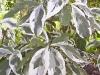 mt-cootha-botanical-gardens33