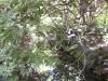 mt-cootha-botanical-gardens34