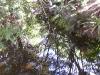 mt-cootha-botanical-gardens35