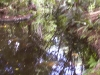 mt-cootha-botanical-gardens36