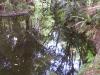 mt-cootha-botanical-gardens37