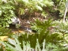 mt-cootha-botanical-gardens38