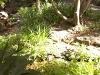 mt-cootha-botanical-gardens39