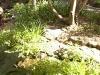 mt-cootha-botanical-gardens40