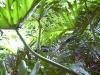 mt-cootha-botanical-gardens41
