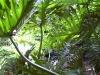 mt-cootha-botanical-gardens42