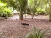 mt-cootha-botanical-gardens43