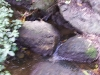 mt-cootha-botanical-gardens45