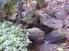 mt-cootha-botanical-gardens46