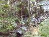 mt-cootha-botanical-gardens56