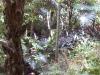 mt-cootha-botanical-gardens57