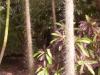 mt-cootha-botanical-gardens58