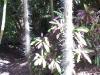 mt-cootha-botanical-gardens59