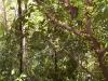 mt-cootha-botanical-gardens64