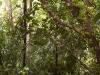 mt-cootha-botanical-gardens65