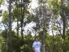 mt-cootha-botanical-gardens68