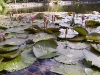 mt-cootha-botanical-gardens72