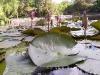 mt-cootha-botanical-gardens73