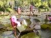 mt-cootha-botanical-gardens74
