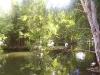 mt-cootha-botanical-gardens75