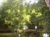 mt-cootha-botanical-gardens76