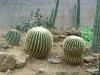 mt-cootha-botanical-gardens81