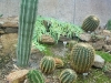 mt-cootha-botanical-gardens84