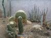 mt-cootha-botanical-gardens85