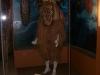 brisbane_museum022