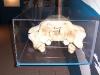 brisbane_museum046