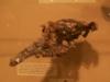 brisbane_museum066