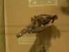 brisbane_museum067