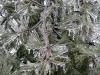 eku_ice_storm02