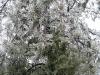 eku_ice_storm10