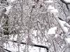 eku_ice_storm_55