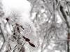 eku_ice_storm_56