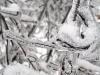 eku_ice_storm_57