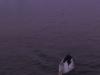 gold-coast-the-pelican016