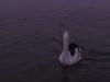 gold-coast-the-pelican019