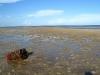 mashes_beach_25